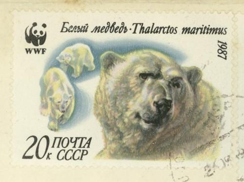 Tiere in Arktis und Antarktis Eisbar10