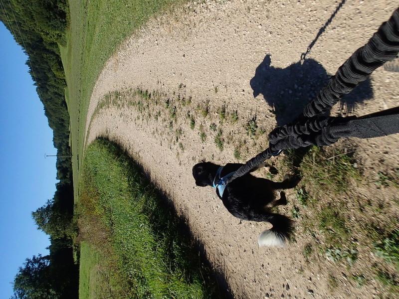 border - GUS - X Border Collie et AIKO - Berger Australien P8240013