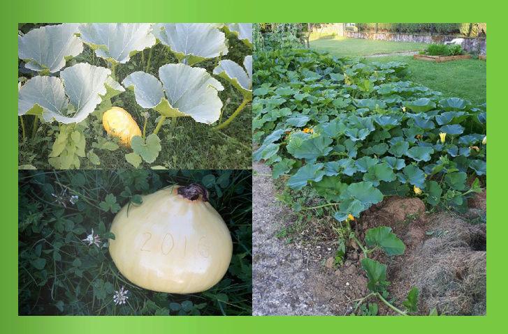 L'évolution de mon petit jardin ! Captur12