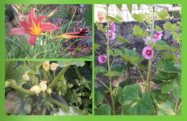 L'évolution de mon petit jardin ! Captur13