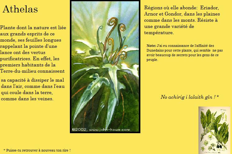 L'Herbier de MT Athela10