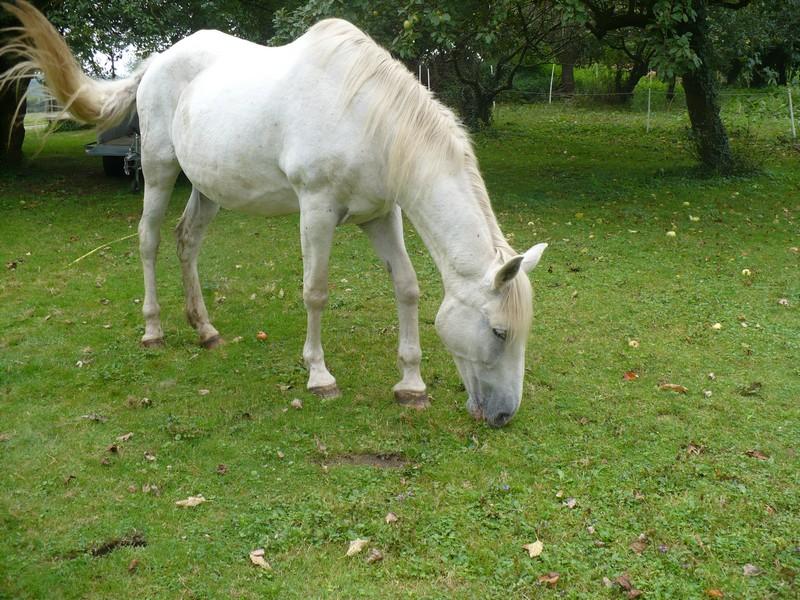 DONA - PRE née en 1987 - accueillie en septembre 2012 chez Pech-Petit - Page 4 Dona_l23