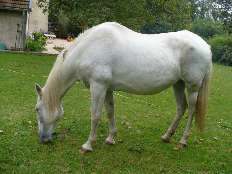 DONA - PRE née en 1987 - accueillie en septembre 2012 chez Pech-Petit - Page 4 Dona_l24