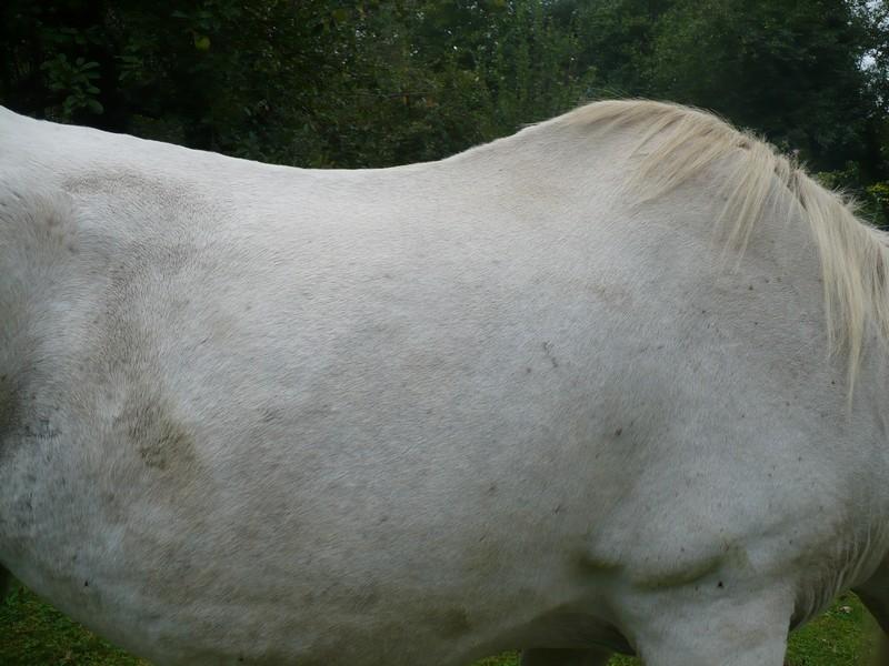 DONA - PRE née en 1987 - accueillie en septembre 2012 chez Pech-Petit - Page 4 Dona_l26
