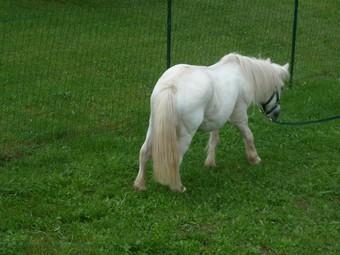 PRISCA - ONC poney typée Shetland née en 1990 - adoptée en septembre 2010 par Delphine - Page 3 Prisca10