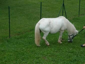 PRISCA - ONC poney typée Shetland née en 1990 - adoptée en septembre 2010 par Delphine - Page 3 Prisca11