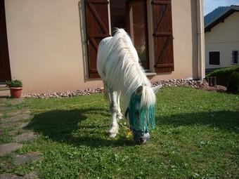 PRISCA - ONC poney typée Shetland née en 1990 - adoptée en septembre 2010 par Delphine - Page 3 Prisca12