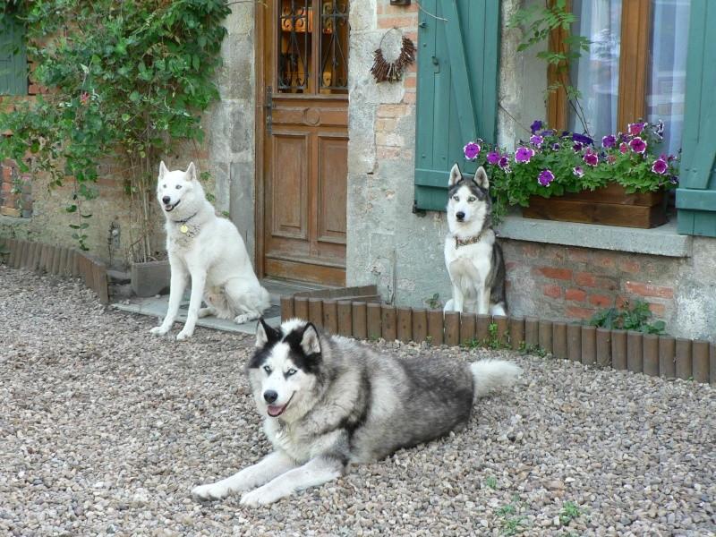ECLAIR - croisé husky - 9 ans de refuge - MOUGINS (06) - Page 14 Photo_10