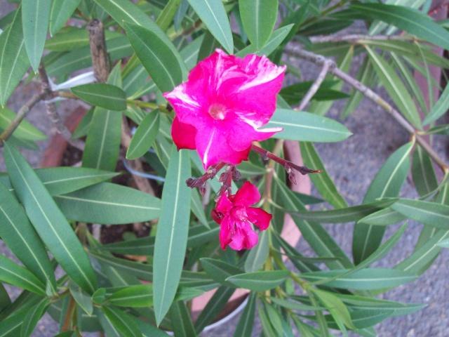 les fleurs qui m'accompagne  Photos63