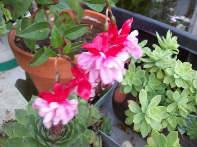 les fleurs qui m'accompagne  Photos64