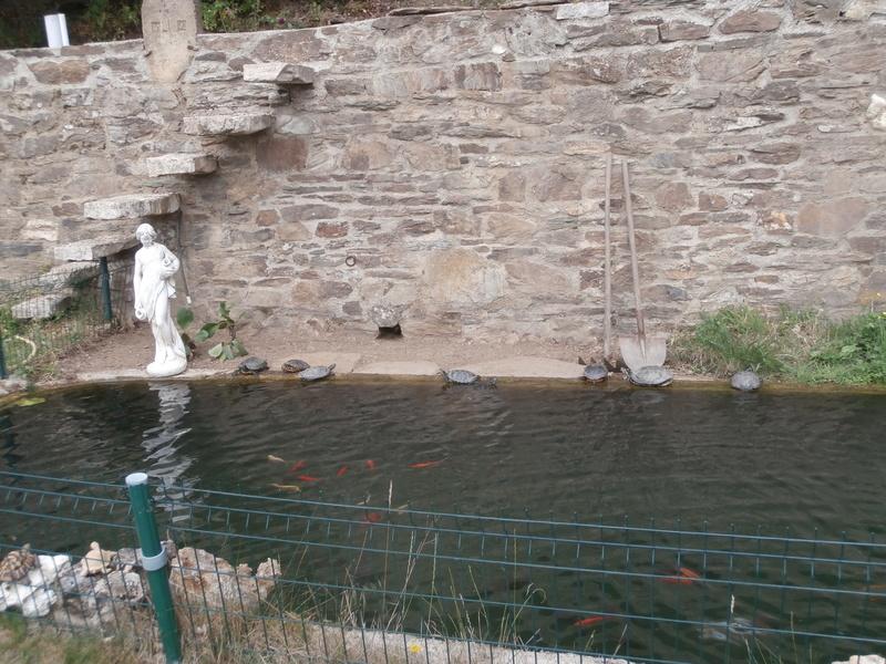 Mon bassin P7050214