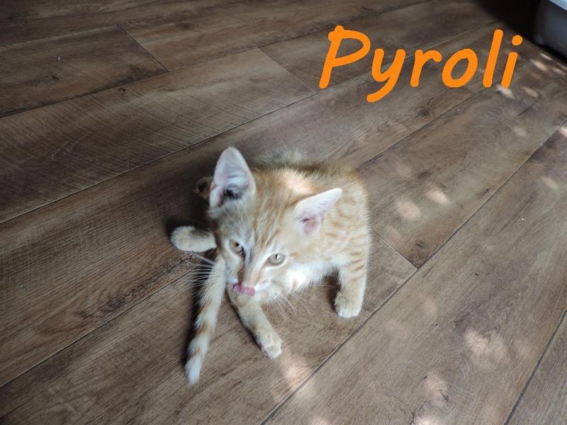 66) PYROLI, né en mai 2016 Dscn7410