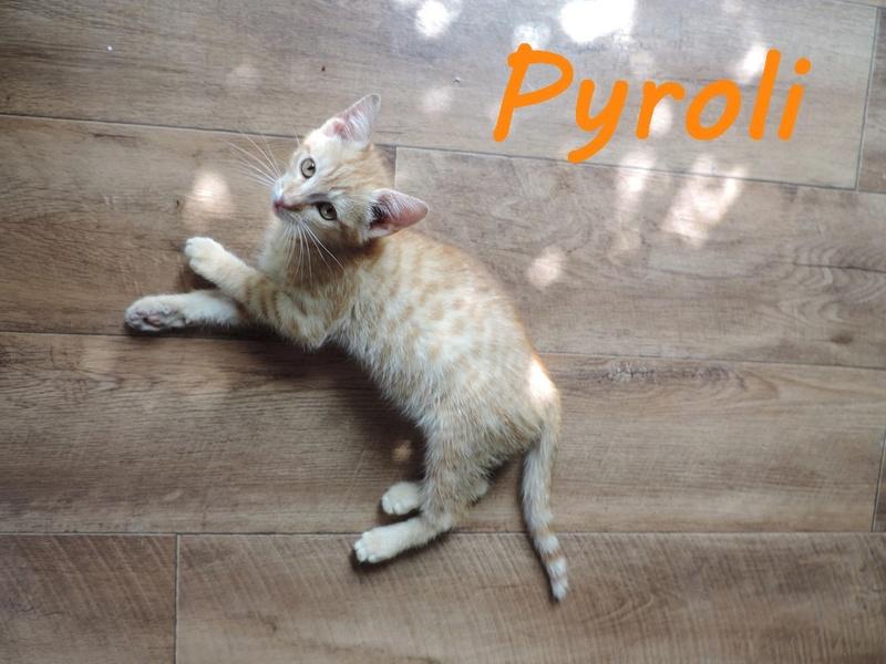 66) PYROLI, né en mai 2016 Dscn7411