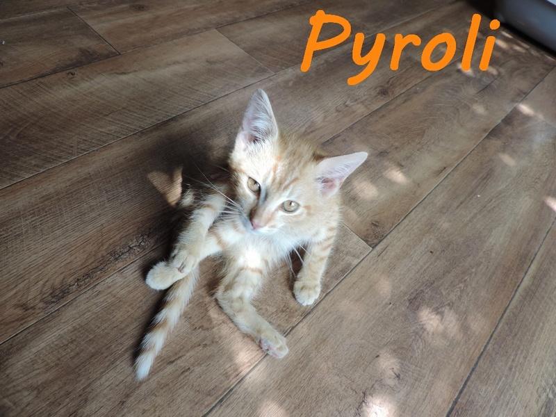 66) PYROLI, né en mai 2016 Dscn7412