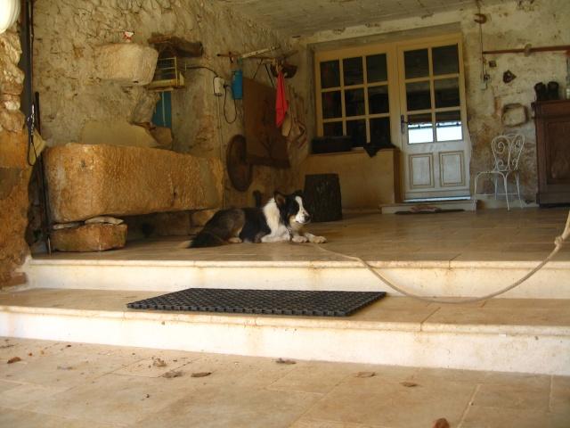 chien - présentation de JUSS, chien traumatisé  - Page 10 Img_0319