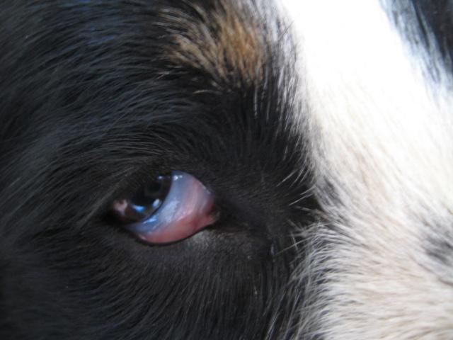 chien - présentation de JUSS, chien traumatisé  - Page 10 Img_0321