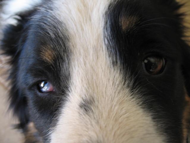 chien - présentation de JUSS, chien traumatisé  - Page 10 Img_0322