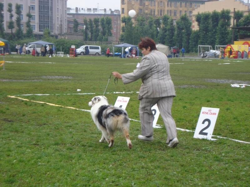 Выставочные успехи наших собак Dsc05510