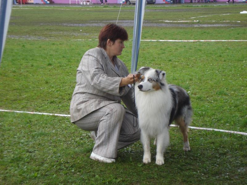 Выставочные успехи наших собак Dsc05511