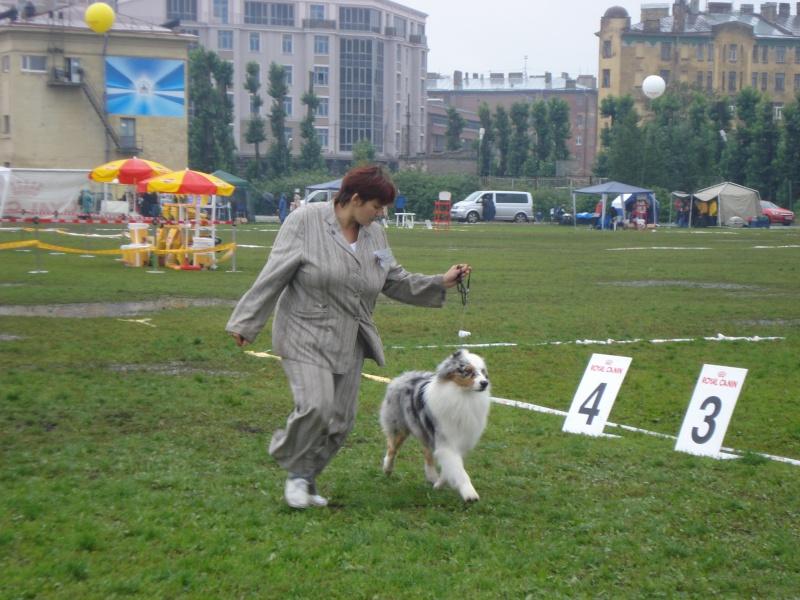Выставочные успехи наших собак Dsc05512