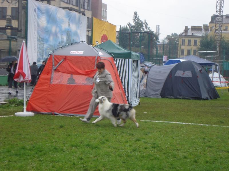 Выставочные успехи наших собак Dsc05513