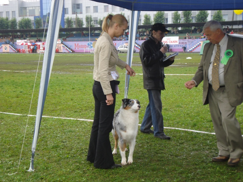 Выставочные успехи наших собак Dsc05514