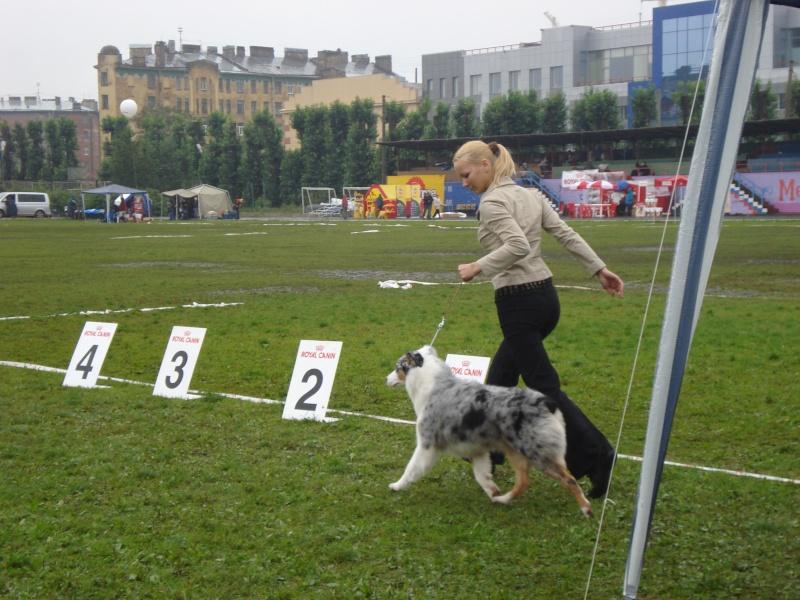 Выставочные успехи наших собак Dsc05515