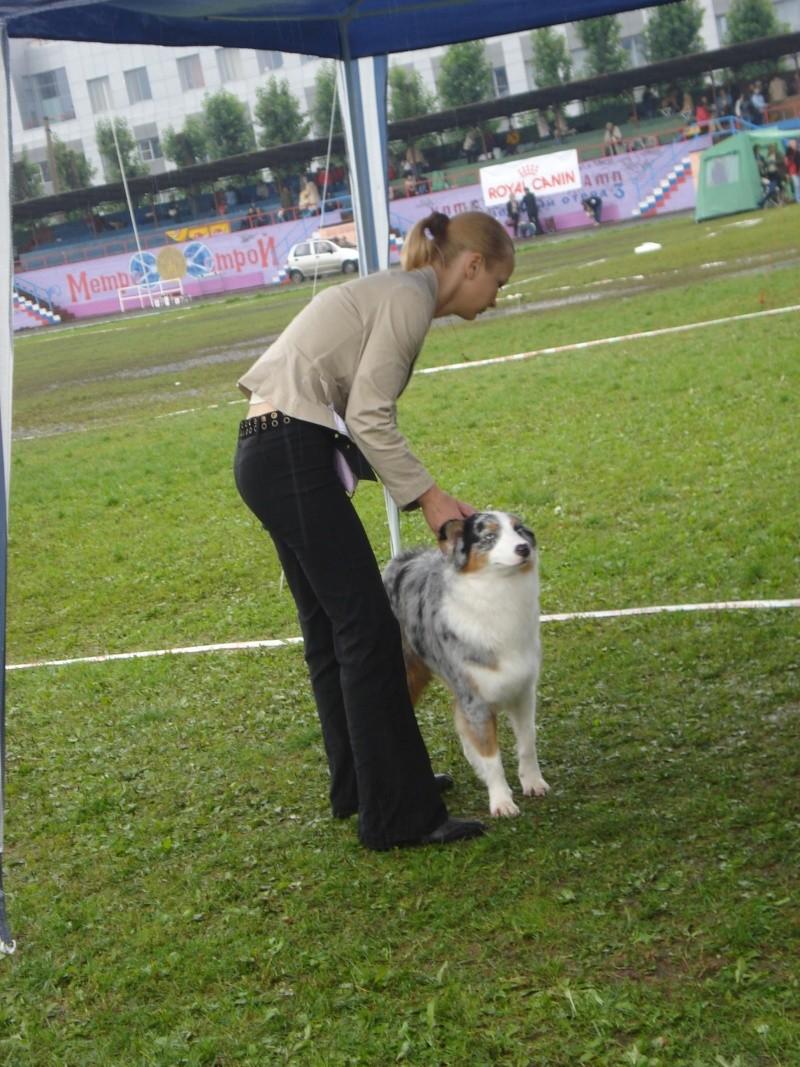 Выставочные успехи наших собак Dsc05516
