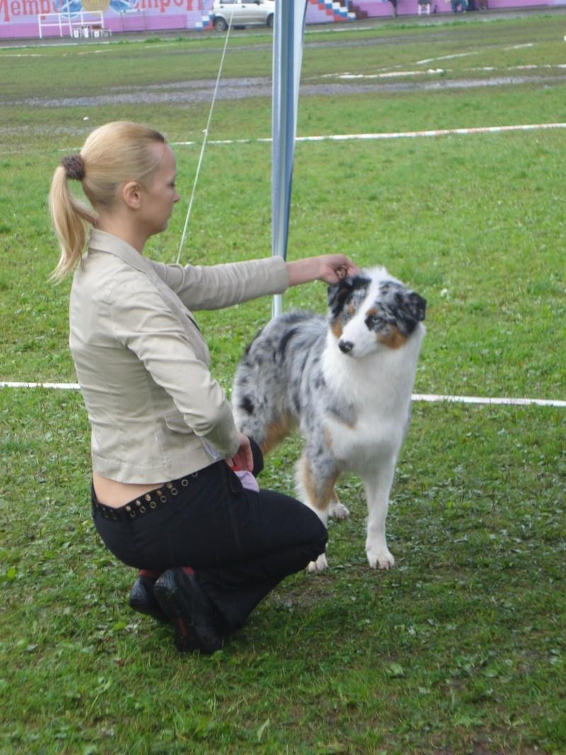 Выставочные успехи наших собак Dsc05517