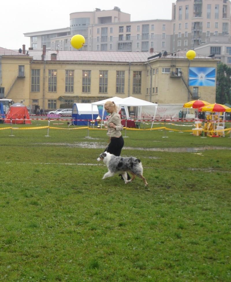 Выставочные успехи наших собак Dsc05518