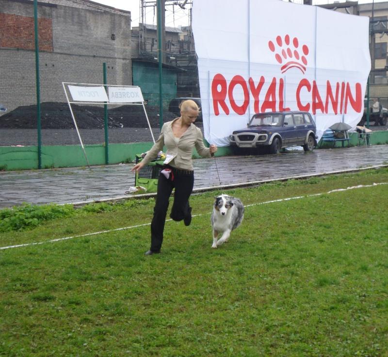 Выставочные успехи наших собак Dsc05519