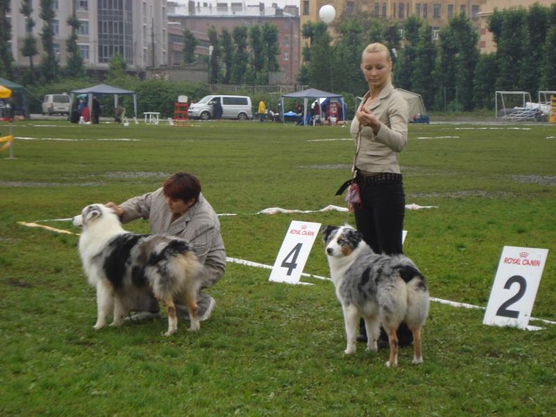 Выставочные успехи наших собак Dsc05520