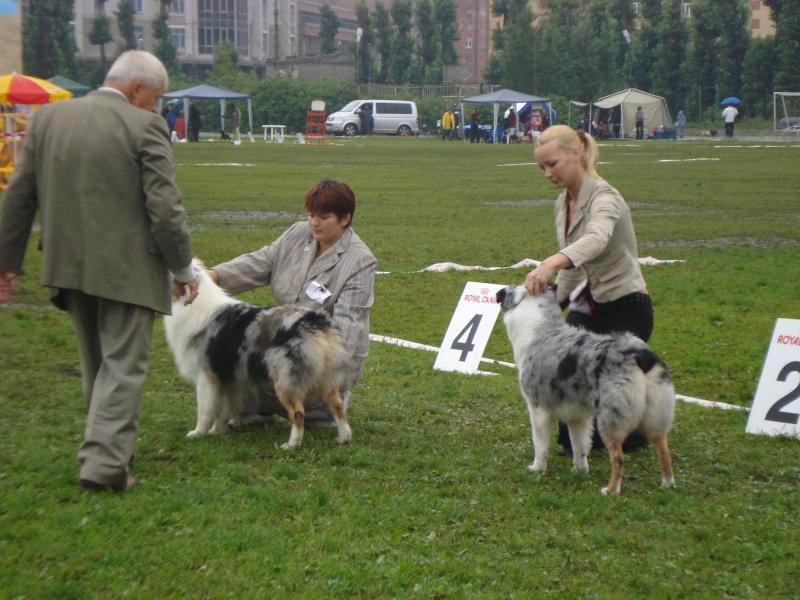 Выставочные успехи наших собак Dsc05521