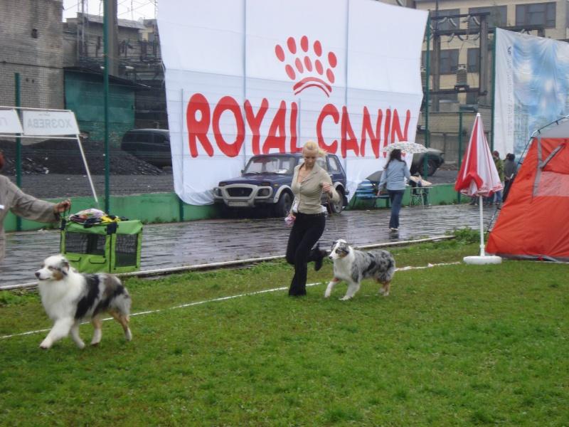 Выставочные успехи наших собак Dsc05522