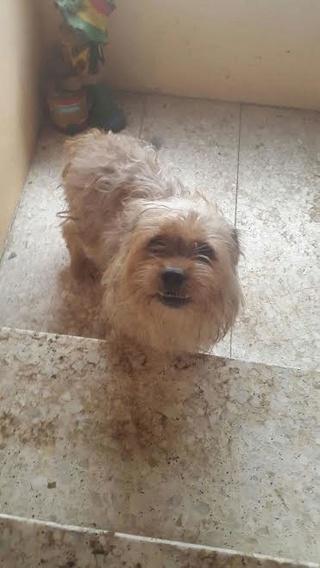 Acogida urgente para unos perritos. Alejandro Arribas nos apoya en esta causa Unname11