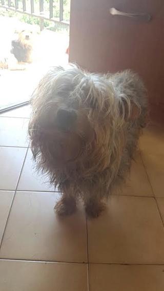 Acogida urgente para unos perritos. Alejandro Arribas nos apoya en esta causa Unname13