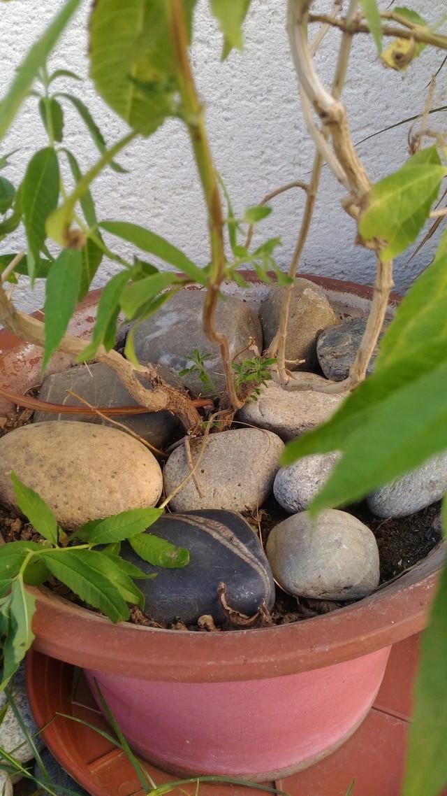 Mon chat fait pipi dans les plantes ... P_201625