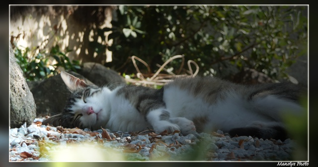 Mes pitis chats ! - Page 4 Juille10