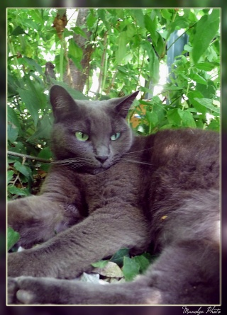 Mes pitis chats ! - Page 4 Juille16