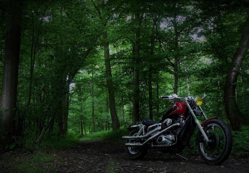 Vote: concours photo du mois de juin: votre V2 dans les bois Dscf0013
