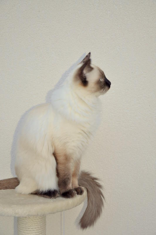 Babuska Trixie, alias Kéa - Page 4 Dsc_0010