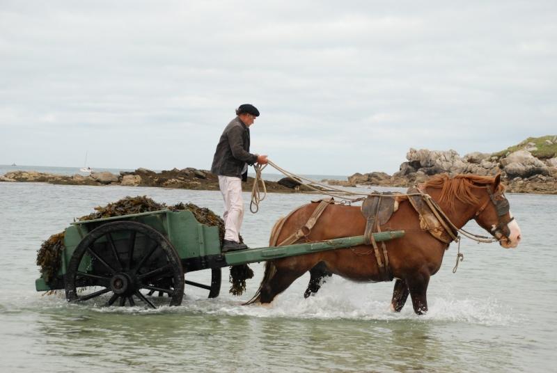 Kezeg ar mor (Les chevaux de la mer) Goem_010
