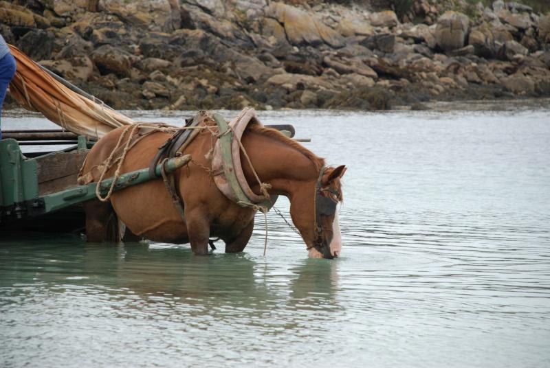 Kezeg ar mor (Les chevaux de la mer) Goem_014