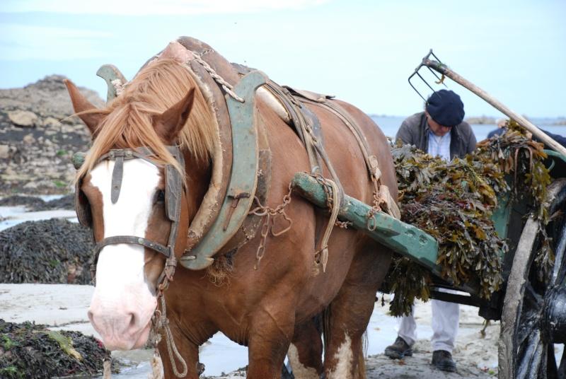 Kezeg ar mor (Les chevaux de la mer) Goem_018