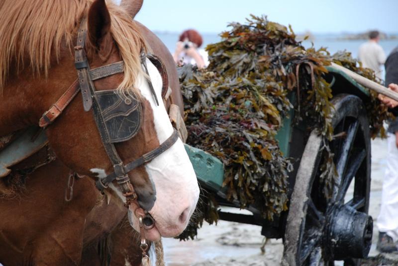 Kezeg ar mor (Les chevaux de la mer) Goem_020