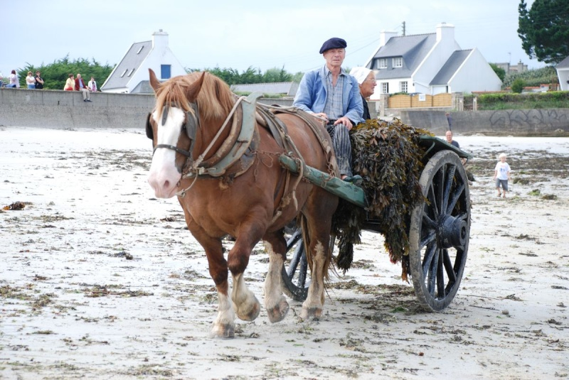 Kezeg ar mor (Les chevaux de la mer) Goem_022