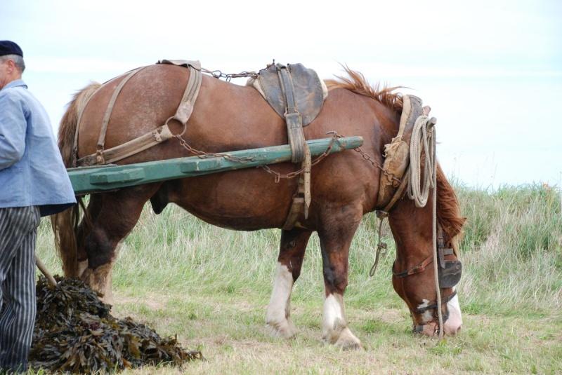 Kezeg ar mor (Les chevaux de la mer) Goem_024