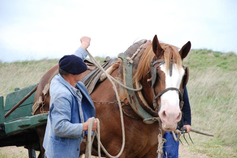 Kezeg ar mor (Les chevaux de la mer) Goem_025