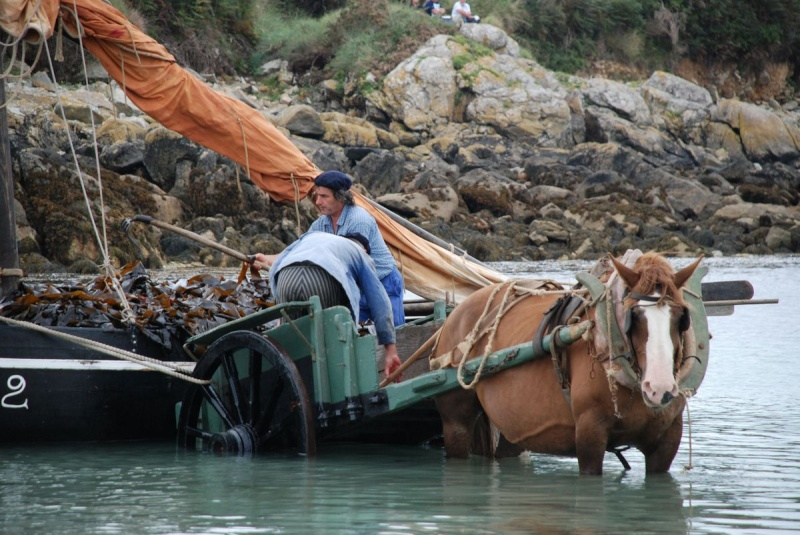 Kezeg ar mor (Les chevaux de la mer) Goem_036