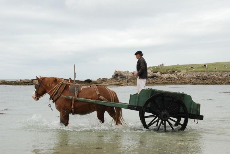 Kezeg ar mor (Les chevaux de la mer) Goem_037